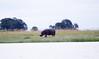 Hippo Chobe_14-03-08__O6B1495