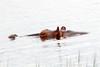 Hippo Chobe_14-03-08__O6B1298