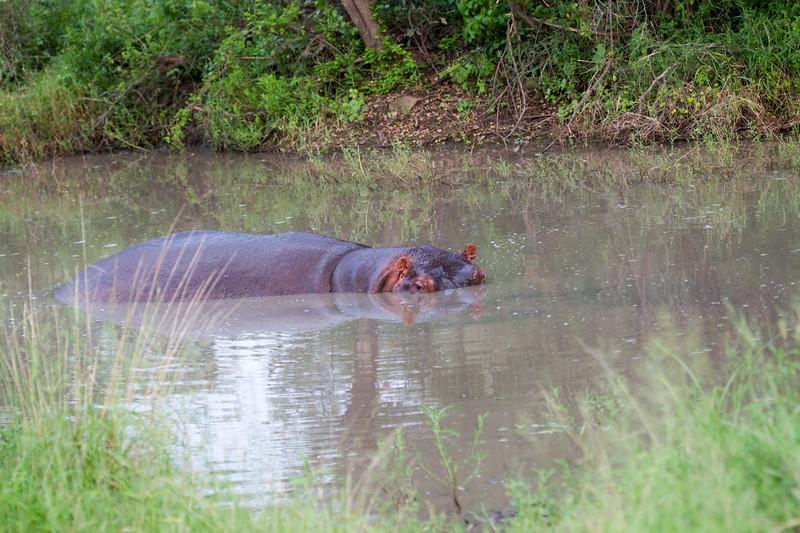 Hippo Kirkman_14-03-16__O6B2517