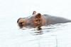 Hippo Chobe_14-03-08__O6B1296