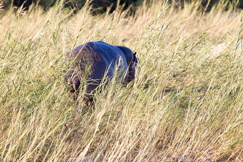 Hippo Kirkman_14-03-15__O6B2134