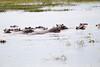 Hippos Chobe_14-03-08__O6B1546