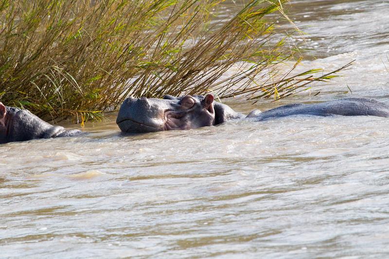 Hippo Kirkman_14-03-15__O6B2295