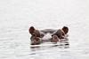 Hippo Chobe_14-03-08__O6B1284