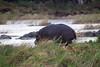 Hippo Kirkman_14-03-17__O6B2903