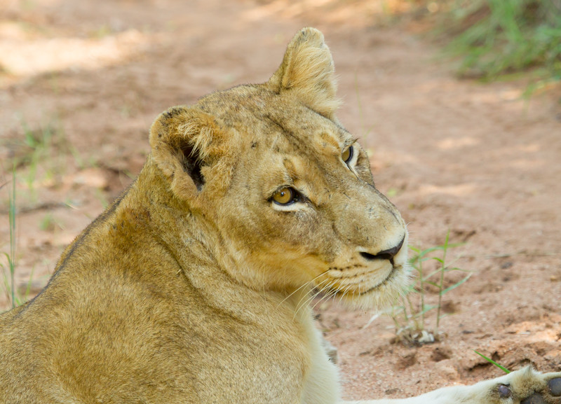 Lions Kirkman_14-03-16__O6B2345