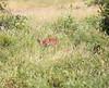 SteenBok Kruger_14-03-02__O6B0364