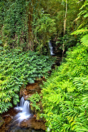 Water running through the dense rain forest in Akaka Falls State Park, Big Island, Hawaii