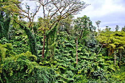 Dense and diverse rain forest in Akaka Falls State Park