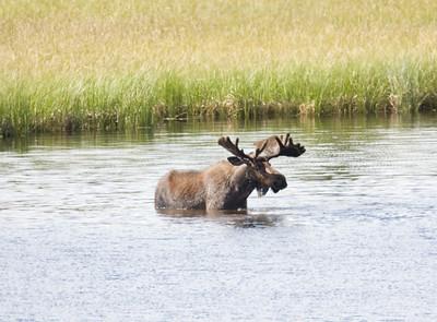 08-06-29_Moose Hyw Kulane Lake_0016