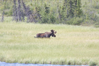 08-06-29_Moose Hyw Kulane Lake_0068