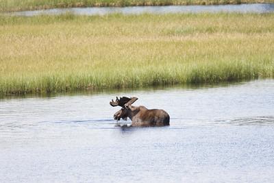 08-06-29_Moose Hyw Kulane Lake_0040