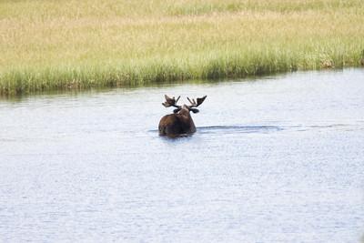 08-06-29_Moose Hyw Kulane Lake_0035