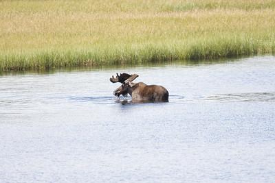 08-06-29_Moose Hyw Kulane Lake_0039