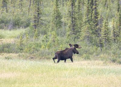 08-06-29_Moose Hyw Kulane Lake_0074
