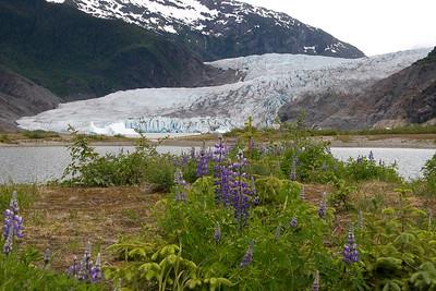 08-06-24_Mendenhall Glacier_0014