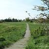 Blackheath Scrubland
