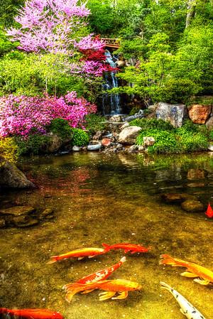 Anderson Japanese Gardens - 5.13.13