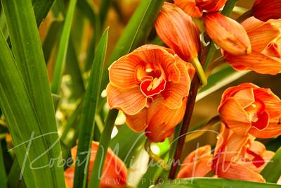 1486-Orange Orchid