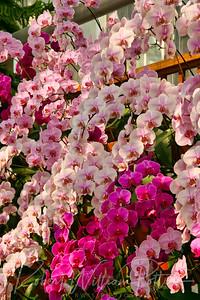 1510-Orchids