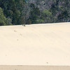 Sand boarding at The Desert, Moreton Island
