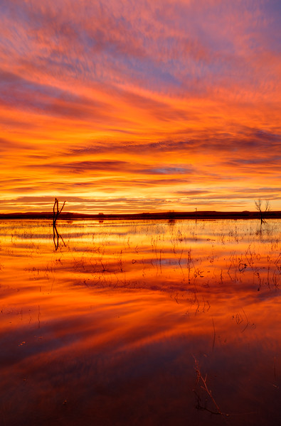 Bosque Sunrise