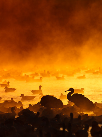 Fire in the Mist