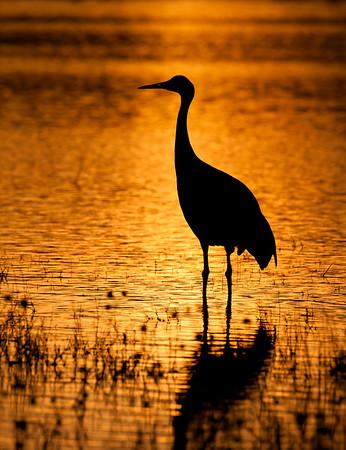 Crane in Gold