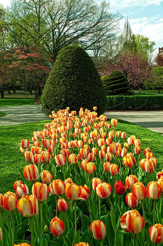 Spring Tullips