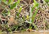 Jaguar Stalkng
