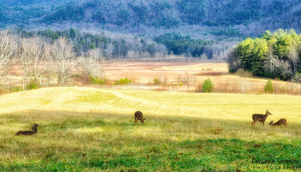 Cades Cove~Great Smoky Mountain National Park~TN