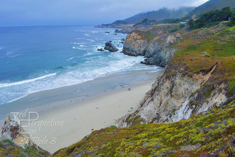 Big Sur Cliff Wildflowers - Big Sur Coast, California - USA