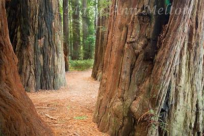 Jedediah Smith Redwoods State Park 0742