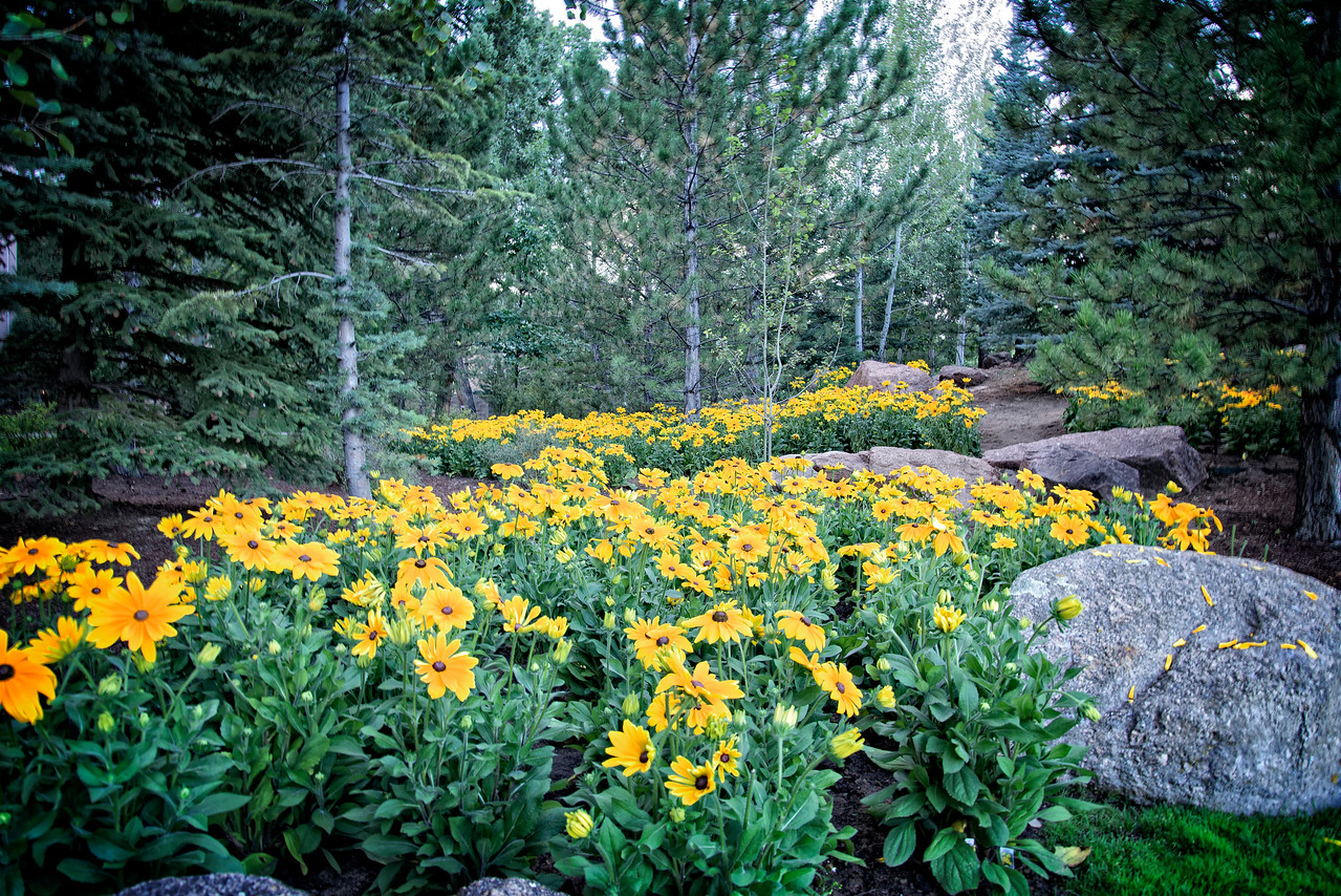 Yellow mountain flowers