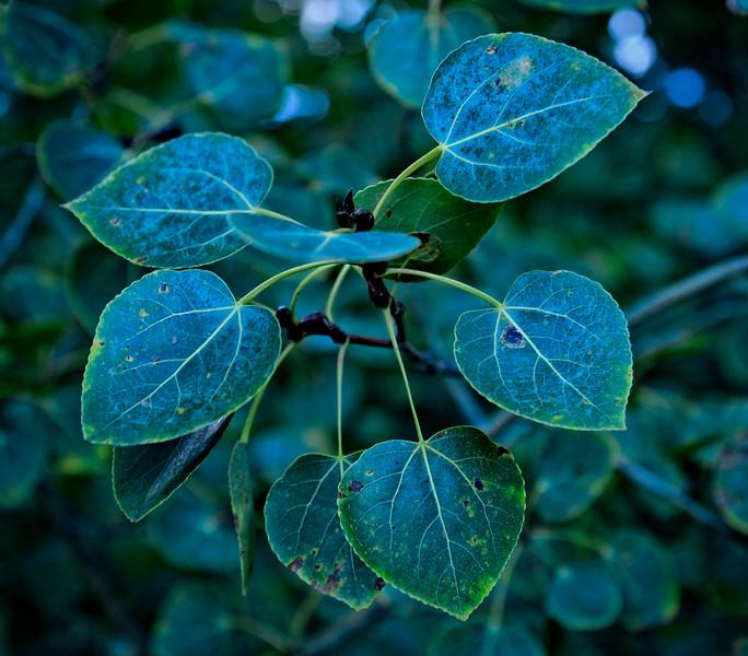 Belle foglie imprerfette