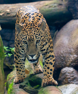 Jaguar WatGard_12-10-16__MG_4003