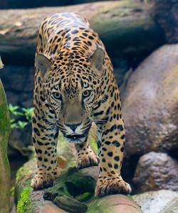 Jaguar WatGard_12-10-16__MG_4003