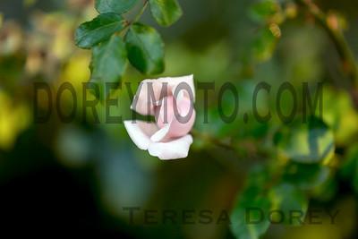 IMG_0112-Edit