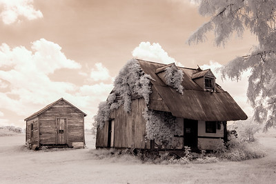 Tin Roof Shack (169-366)