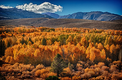 Eastern Sierras 395 hwy Fall season