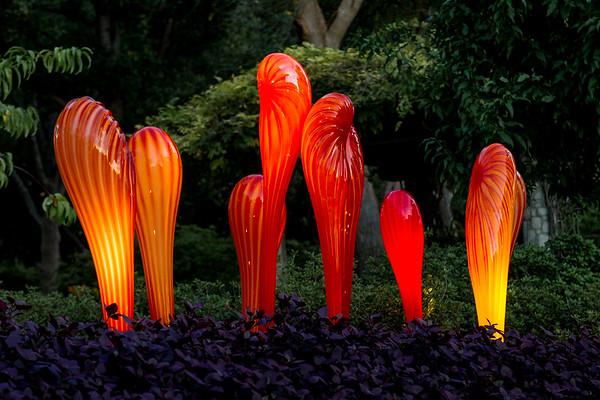 Arboretum Flowers