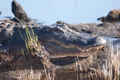 untitled20110129_AlligatorLakeWoodruffFL_7I2B3466_11-01-29