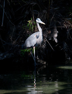 GBH BlueSpringsFL_7I2B3659_11-01-29