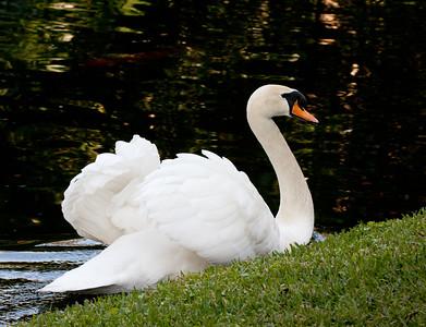 Swan BokTowers FL_IMG_3099_11-01-30