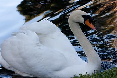Swan BokTowers FL_IMG_3102_11-01-30