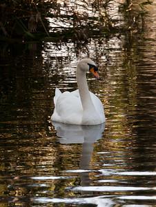 Swan BokTowers FL_IMG_3094_11-01-30