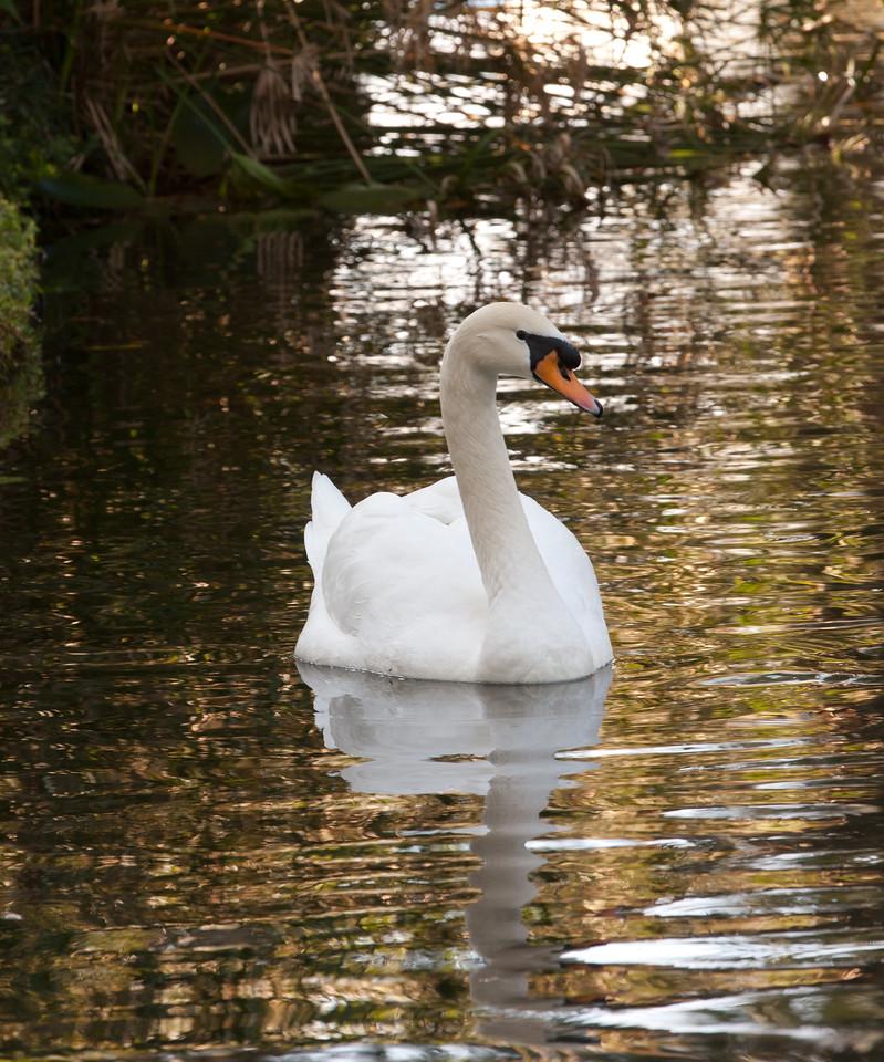 Swan BokTowers FL_IMG_3093_11-01-30