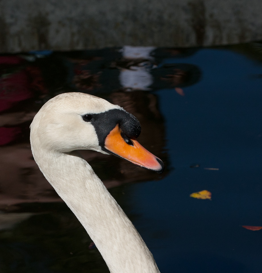 Swan BokTowers FL_IMG_3097_11-01-30