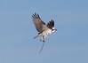 Osprey SmyrnaBeachFL_7I2B3074_11-01-27