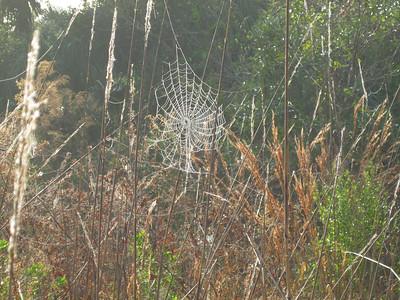 Scenery CorkscrewSwamp_IMG_0037_10-01-02